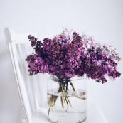 Lilac by Dominika Brudny