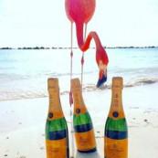 Só queria: #Aruba &