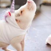 A uni-pig!??!! 😍 @ha