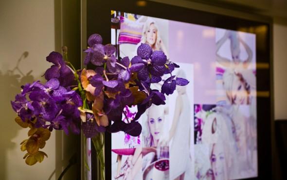 Orquídeas por SP