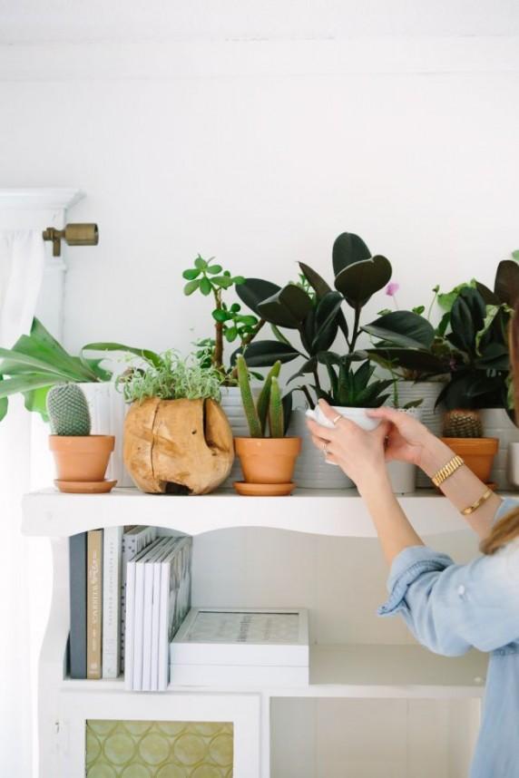 Vasos e vasinhos de plantas