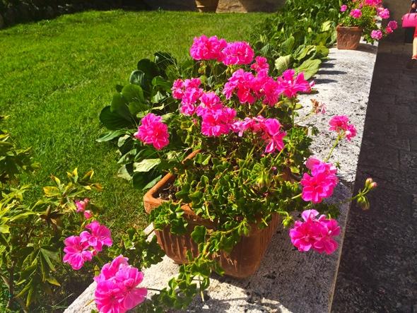 flores-lindas-montalcino