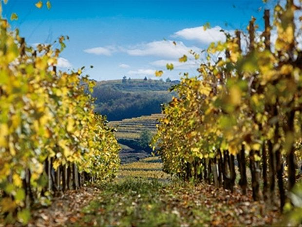 fantinel-friulan-wines-32862