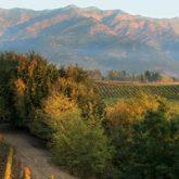 Guia definitivo do Chile: 5 vinhos que você precisa experimentar!