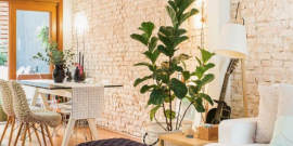 Decorismo: Ficus-Lira na Decor